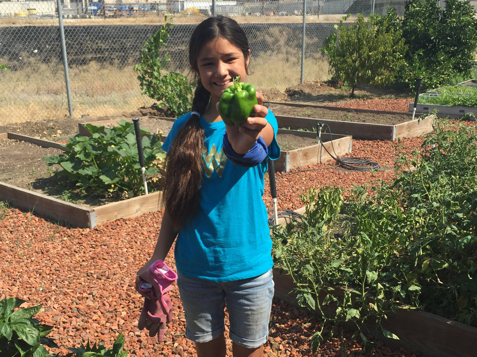 Young girl holding a bellpepper picked from the garden